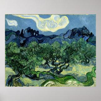 Los olivos de Vincent van Gogh (1889) Póster