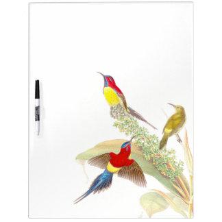 Los pájaros de Goulds Sunbird secan al tablero del Pizarras Blancas De Calidad