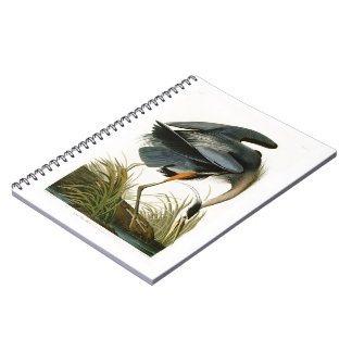 Los pájaros de Juan Audubon de la garza de gran Libreta