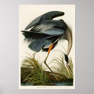 Los pájaros de Juan Audubon de la garza de gran Póster