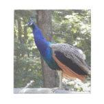 Los pájaros de Kelpsie: Pavo real azul Blocs De Papel