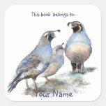 Los pájaros de las codornices de California este Colcomanias Cuadradas