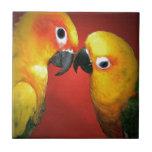 Los pájaros del amor azulejo