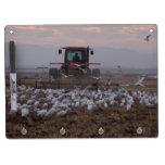 Los pájaros del Egret de la granja secan al tabler Pizarra Blanca