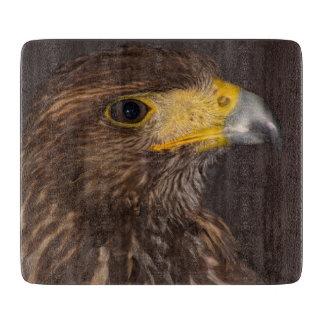 Los pájaros del halcón de la presa fotografían a tablas para cortar