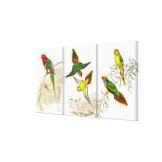 Los pájaros del loro de Goulds Lorikeet Impresión En Lienzo