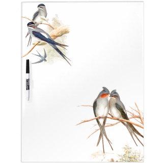 Los pájaros del trago de Goulds secan al tablero Tablero Blanco