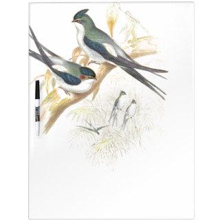 Los pájaros del trago de Goulds secan al tablero Pizarras Blancas