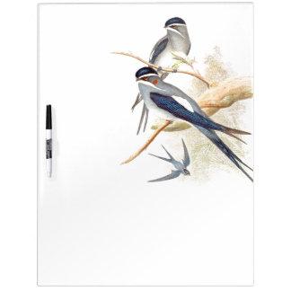 Los pájaros del trago de Goulds secan al tablero Pizarra Blanca