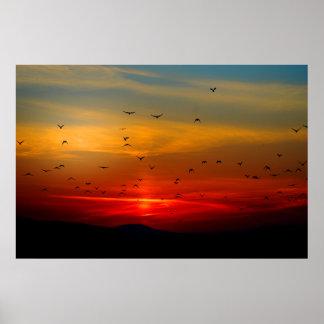 Los pájaros vuelan en el poster de la extra grande