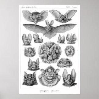 Los palos de Haeckel Poster