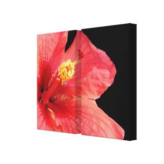 Los paneles envueltos hibisco de la lona de lado a lona envuelta para galerias