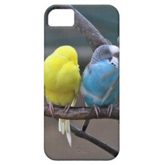 Los Parakeets coloridos brillantes Budgies repiten
