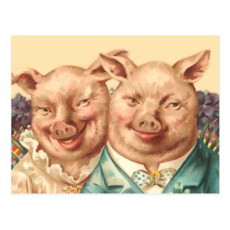 Los pares hermosos del cerdo postal