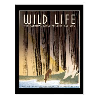 Los parques nacionales de la vida salvaje preserva postales