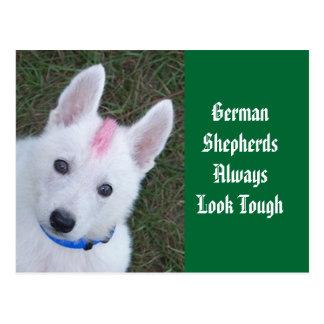 Los pastores alemanes parecen siempre duros postal