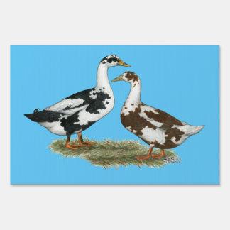 Los patos Ancona se emparejan Letrero