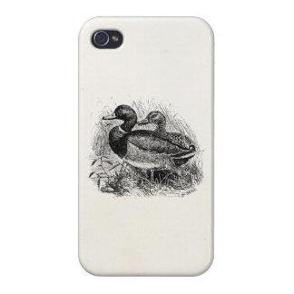 Los patos salvajes del pato silvestre del vintage iPhone 4 funda