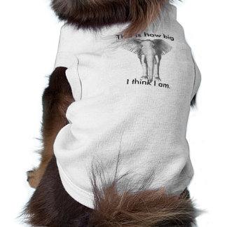 Los pequeños perros piensan que son enormes ropa perro