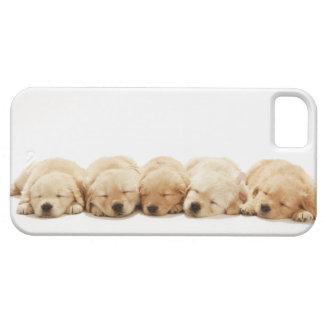 Los perritos del golden retriever iPhone 5 protector