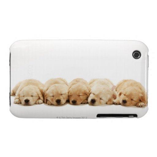 Los perritos del golden retriever iPhone 3 protector