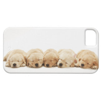 Los perritos del golden retriever iPhone 5 fundas