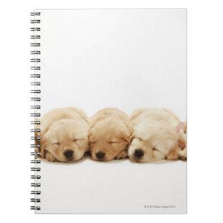 Los perritos del golden retriever libreta
