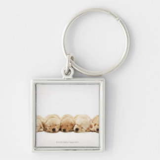 Los perritos del golden retriever llavero cuadrado plateado