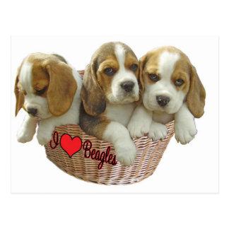 Los perritos del perro del beagle, amo beagles postal