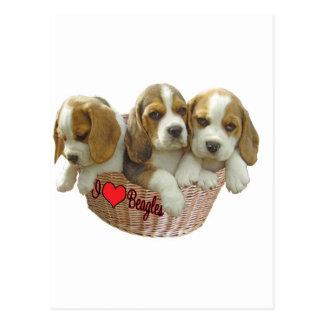 Los perritos del perro del beagle, amo beagles postales