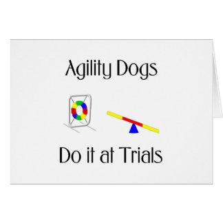 Los perros de la agilidad lo hacen en los ensayos tarjeta pequeña