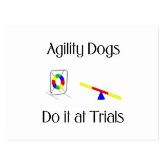 Los perros de la agilidad lo hacen en los ensayos postal