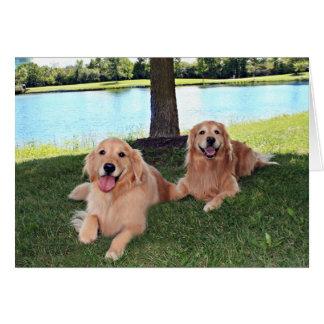 Los perros del golden retriever en parque tienen tarjeta de felicitación