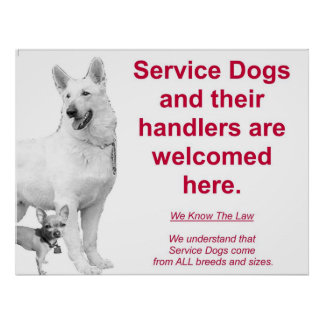 Los perros del servicio son agradables impresiones