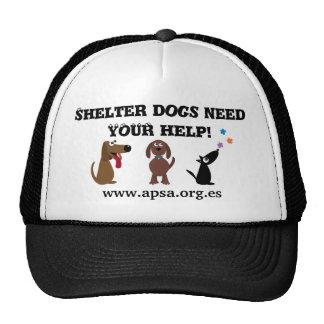 Los perros lindos del refugio necesitan su caridad gorros