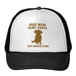 Los perros llevan la protección melenuda de la gorras