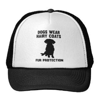 Los perros llevan la protección melenuda de la gorro