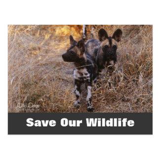 Los perros salvajes, ahorran nuestra postal de la