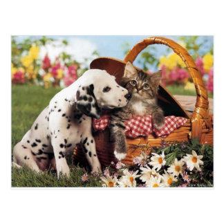 Los perros y los gatos consiguen adelante postal