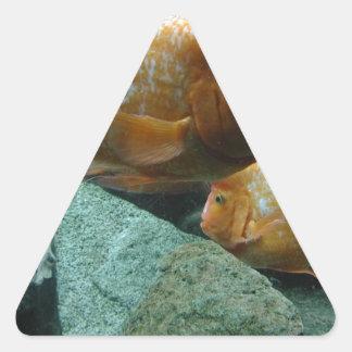 Los pescados a pescado de Momma de la cara Pegatina Triangular