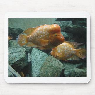 Los pescados a pescado de Momma de la cara solamen Alfombrillas De Raton