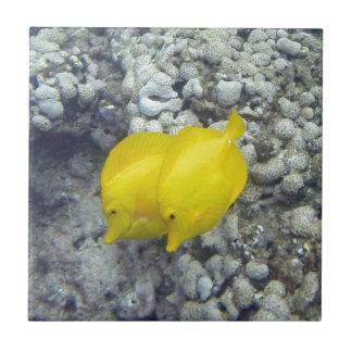 Los pescados amarillos de Tang Azulejo Cuadrado Pequeño