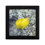 Los pescados amarillos de Tang Caja De Recuerdo