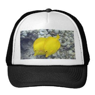Los pescados amarillos de Tang Gorros