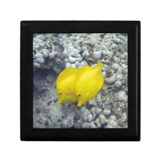 Los pescados amarillos de Tang Joyero Cuadrado Pequeño