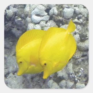 Los pescados amarillos de Tang Pegatina Cuadrada