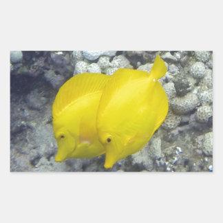 Los pescados amarillos de Tang Pegatina Rectangular