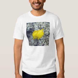 Los pescados amarillos de Tang Polera