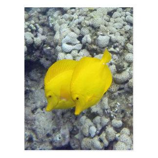 Los pescados amarillos de Tang Postal