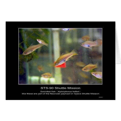 Los pescados de Swordtail como éstos son parte del Tarjeton